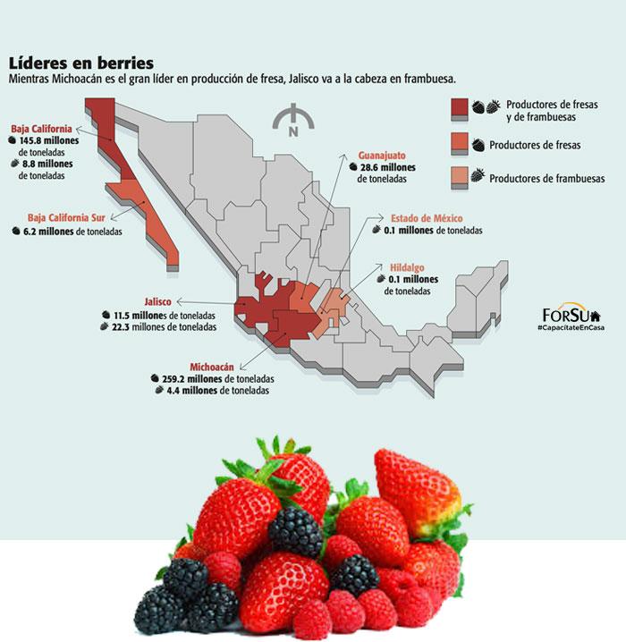 Mapa--Berries